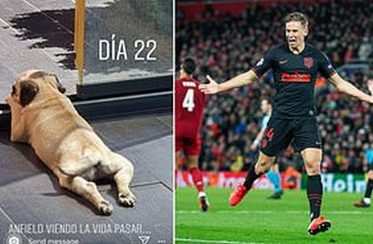 marcos llorente-anjing-daily mail