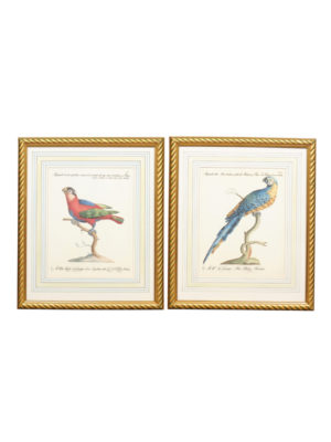 Pair of Framed Bird Engravings