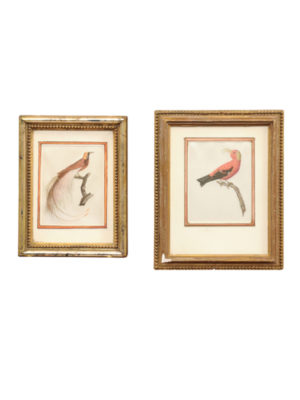 Two Framed Bird Paintings