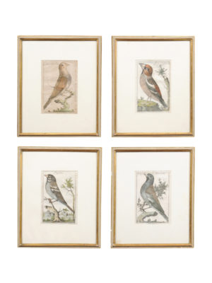 Set 18th Century Italian Bird Engravings