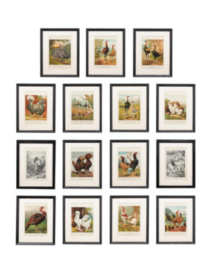 Set of Black Framed Chromolithographs of Cassells Poultry