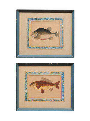 Pair John Pass Engravings of Fish