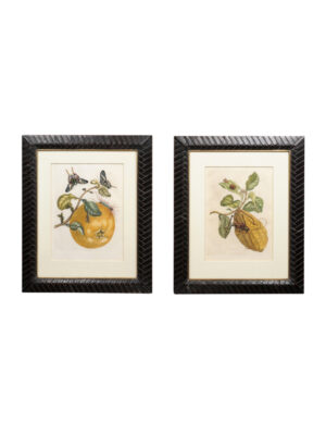 Framed 18th Century Dutch Engravings