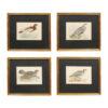 Set 4 Bird Engravings