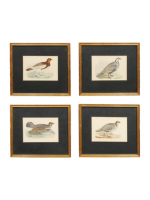 Set 4 Bird Engravings