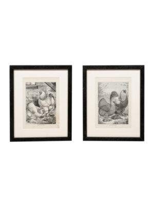 Pair Ludlow Poultry Engravings