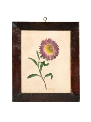 Framed Floral Watercolor, 19th Century